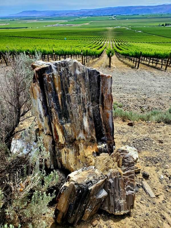 Stone Tree Syrah2021