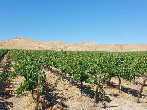 Stone Tree Vineyard